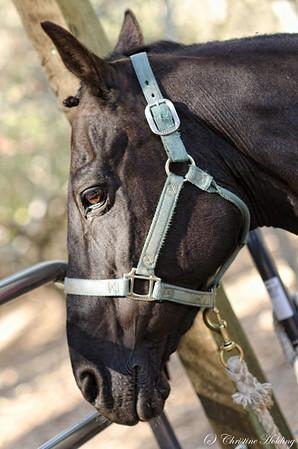Lindsay Long Equestrian Shoot 2012